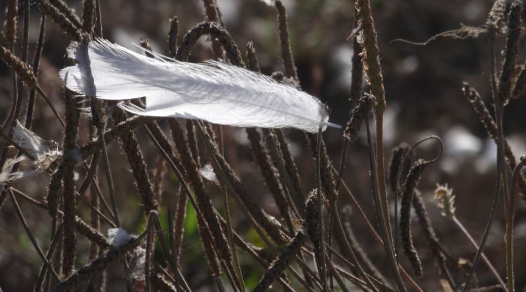 White Feather caught in branches