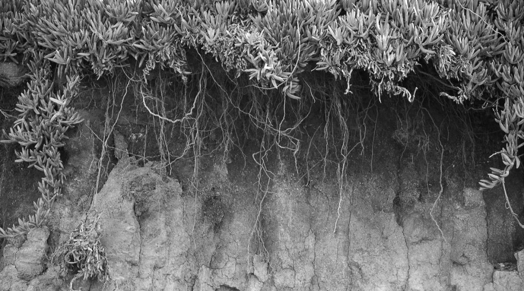 edge of cliff, roots hanging