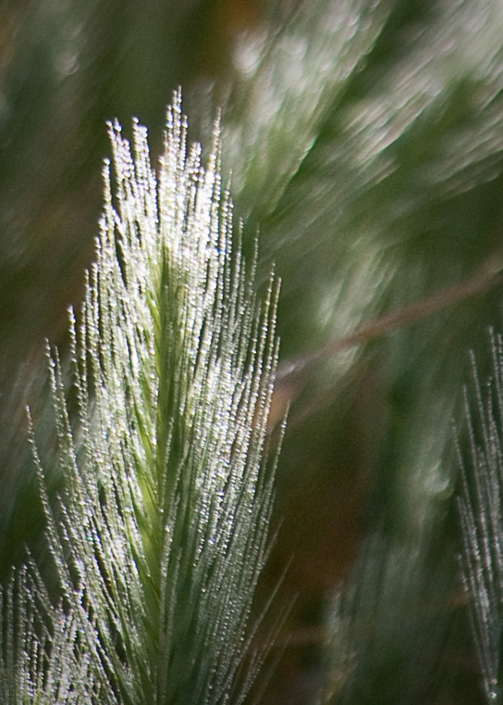 illuminated grass and dew