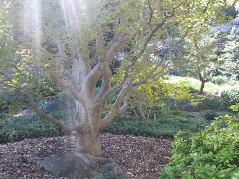 light streaming through tree