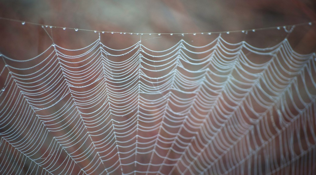 spiderweb with dew
