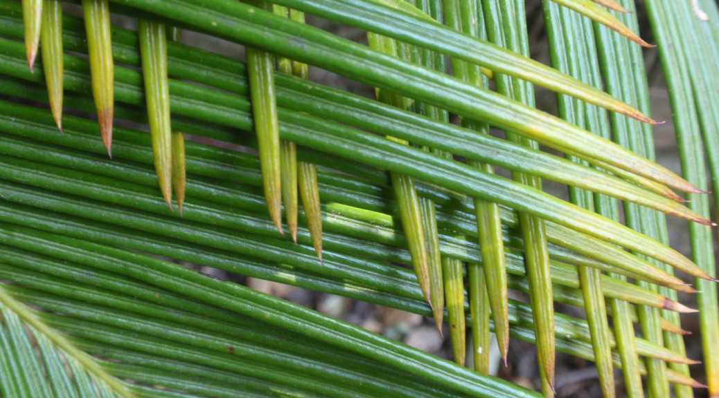 interlaced palm leaves