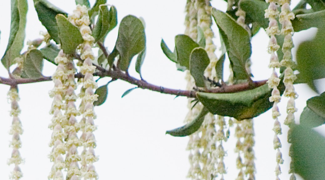 tree flowering in rosaries