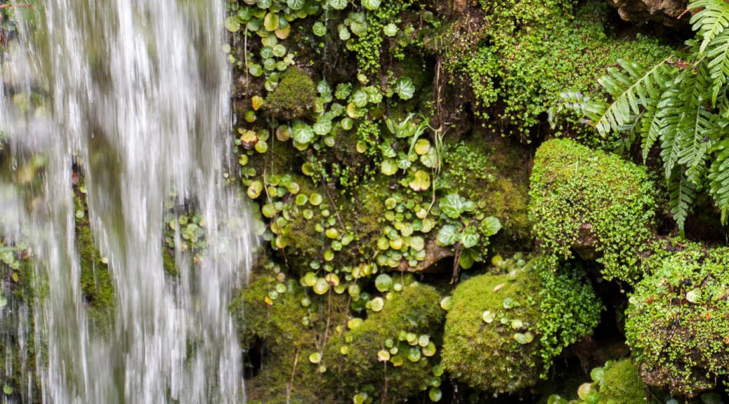 waterfall and moss